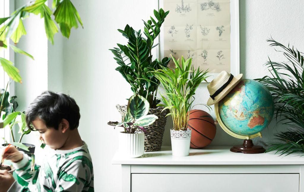 Комнатные растения на комоде в детской комнате