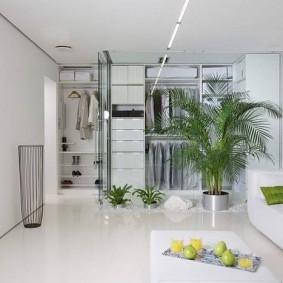 Зеленая пальма в гостиной стиля минимализма