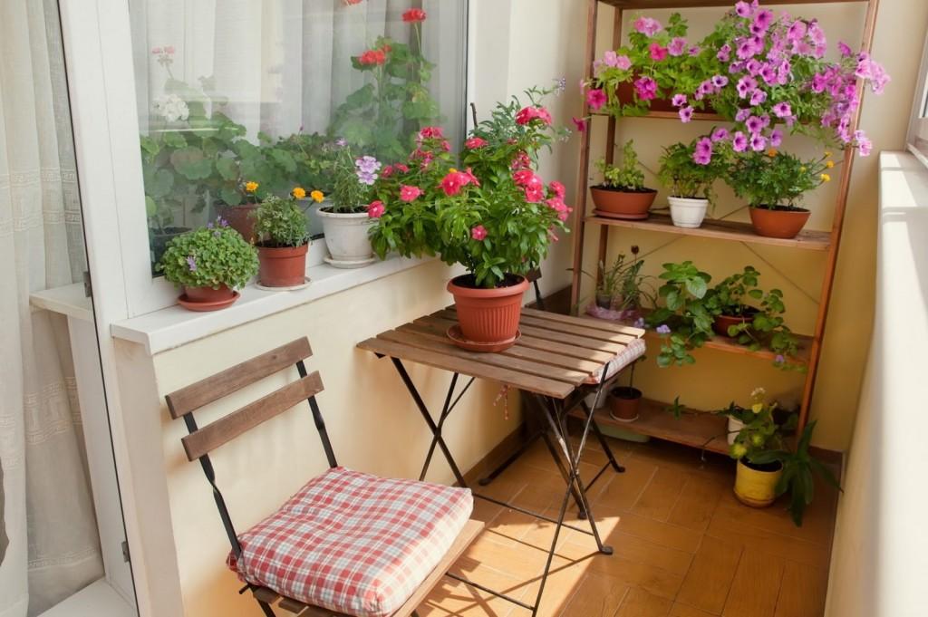 Зимний сад на балконе с теплым остеклением