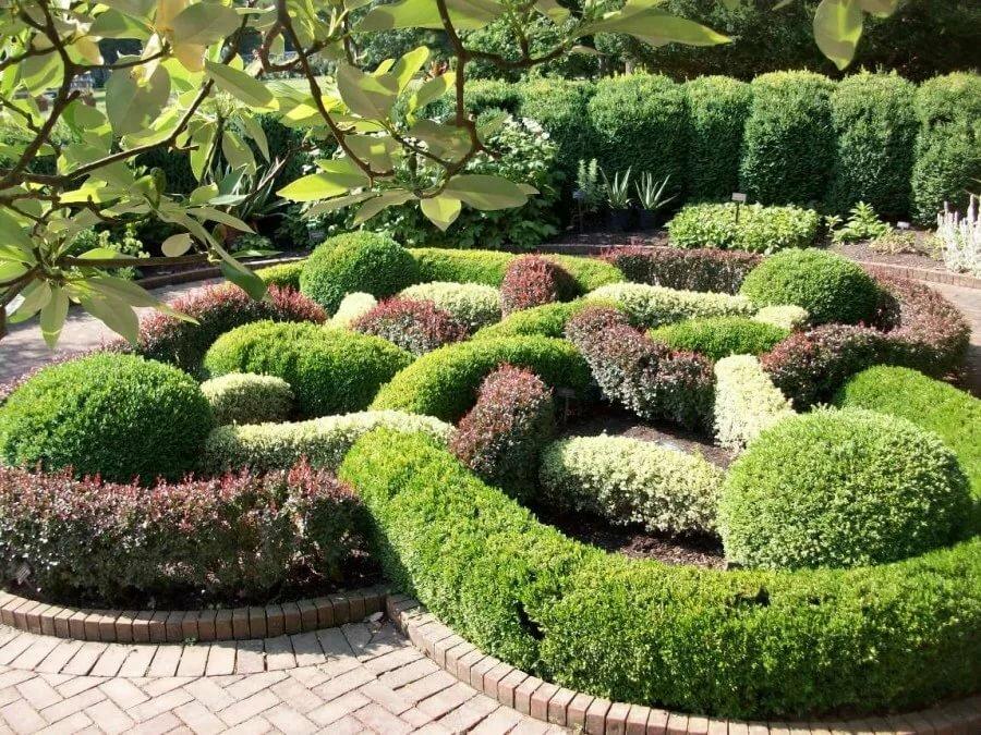 Фигурная стрижка самшита в саду регулярного стиля
