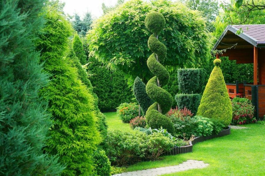 Фигурная стрижка вечнозеленых растений на садовом участке