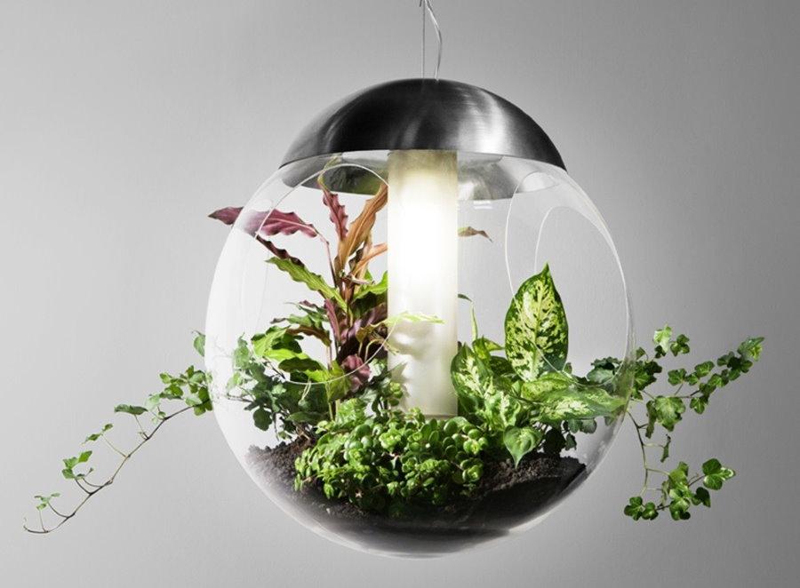 Ночник с живыми растениями внутри