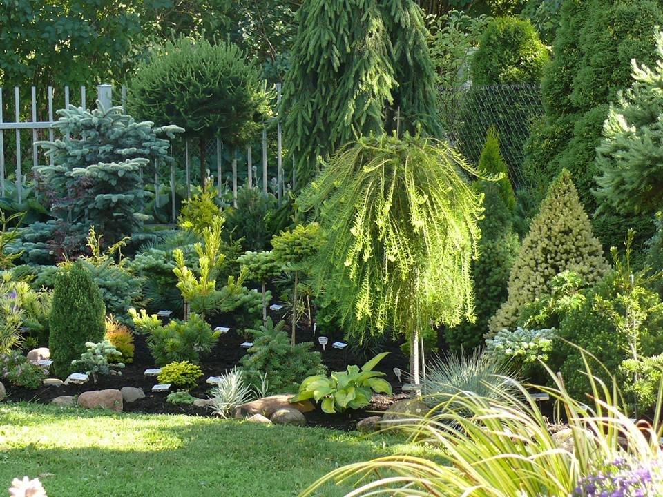 Садовая композиция из вечнозеленых растений