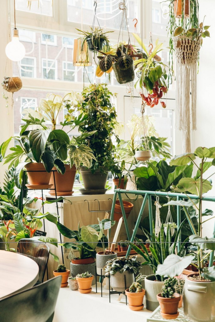 Живые растения в интерьере гостиной комнаты