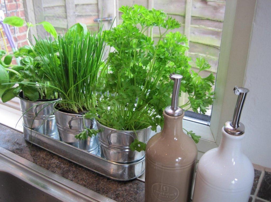 Свежая зелень в горшках на кухонном подоконнике