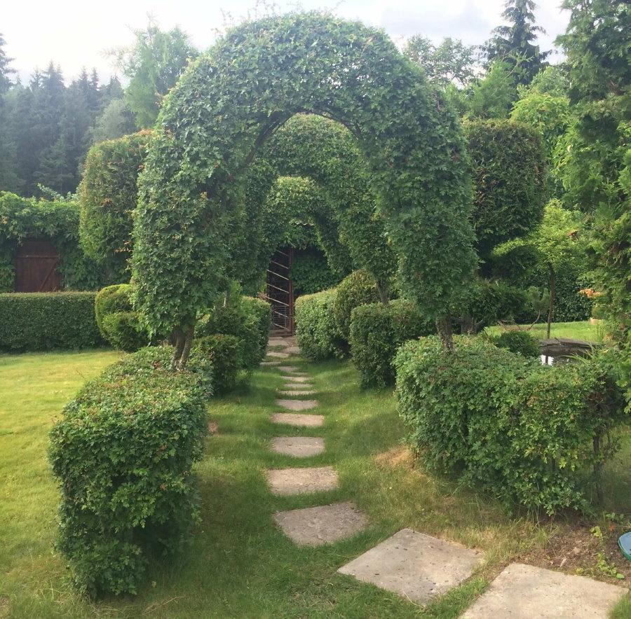 Живая арка из листопадных кустарников