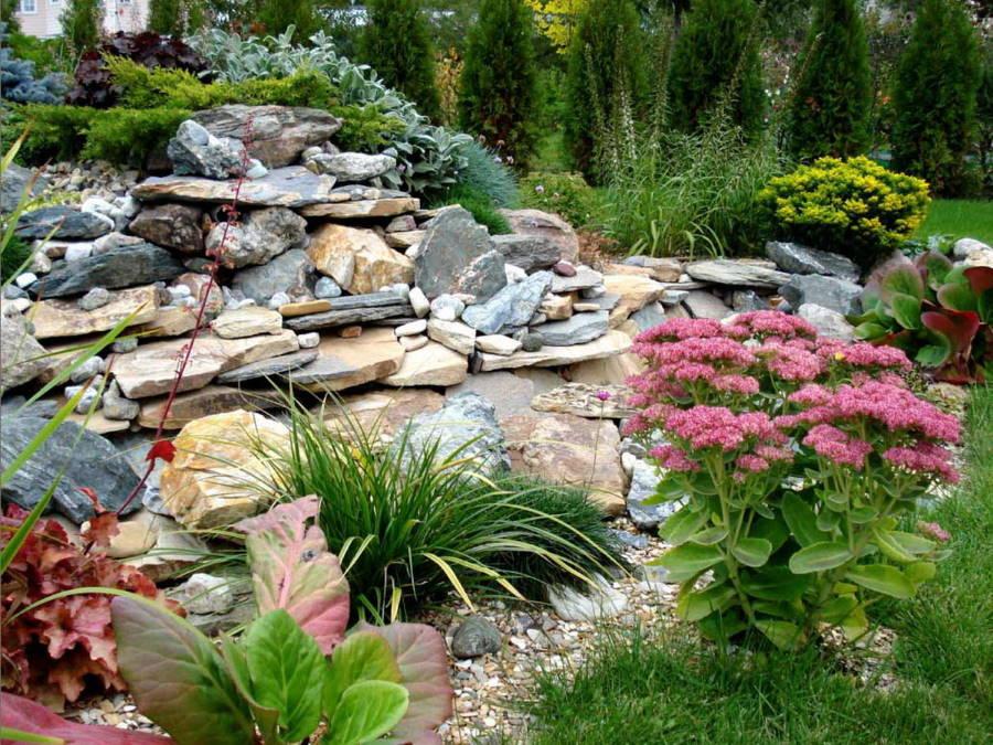 Неприхотливые растения на садовом альпинарии