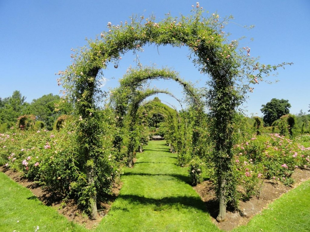 Тоннель из вьющихся растений на садовом участке