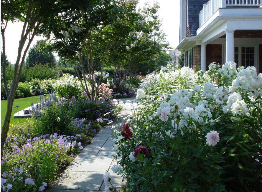 Белые цветы на садовой клумбе