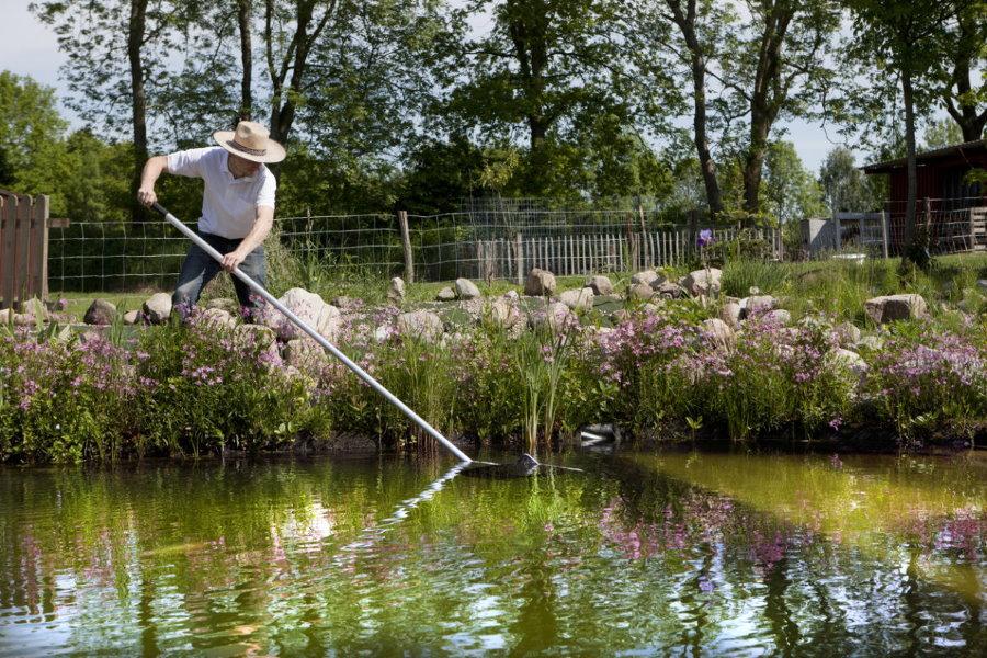 Выращивание рыб в водоеме на даче