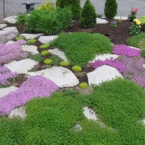 Склон альпинария с почвопокровными растениями