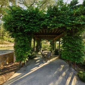 Деревянная пергола с вьющимися растениями