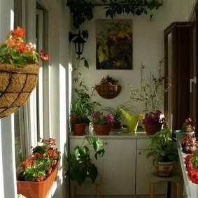 Цветочная оранжерея на утепленном балконе