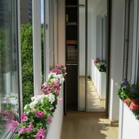 садовые петунии в горшках на балконе