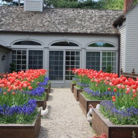 Деревянные клумбы с цветущими тюльпанами