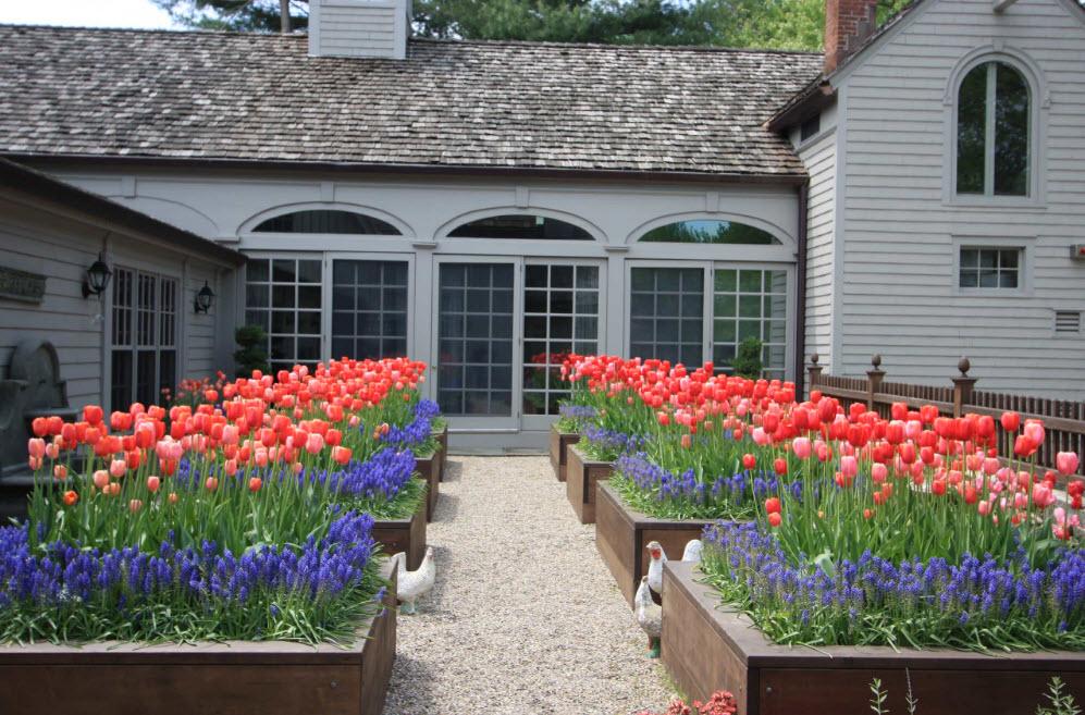 как посадить цветы в саду красиво фото качестве