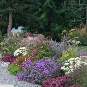 Садовый миксбордер с многолетними цветами