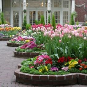 Розовые тюльпаны на весенней клумбе