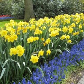 Желтые цветы на загородном участке