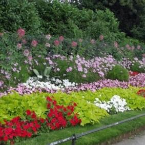 Подбор цветов для клумбы на даче