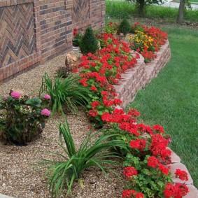 Красные цветы вдоль каменного бордюра