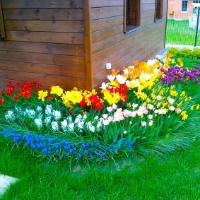 Разные цветы на клумбе у деревянной стены