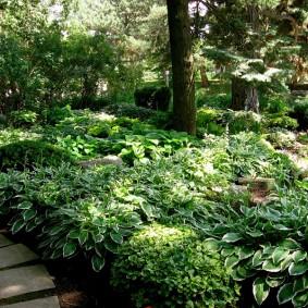Тенистый уголок сада с разросшимися хостами