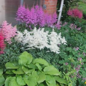 Многолетние цветы с красивыми метелками