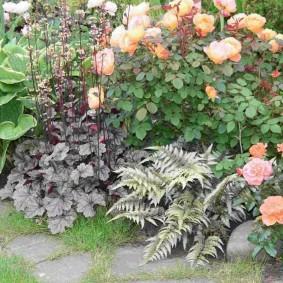 Низкорослые розы на клумбе с хостами
