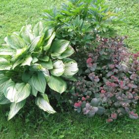 Садовая композиция с участием пиона и хосты