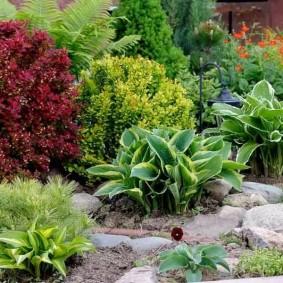 Пестрая клумба с травянистыми растениями