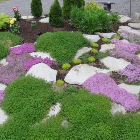 Почвопокровные растения на садовой клумбе