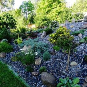 Карликовые растения на клумбе с каменной засыпкой