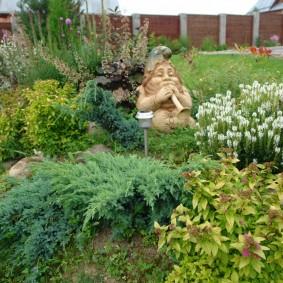 Можжевельник колючий в ландшафте сада