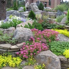 Полевые растения в саду между камнями