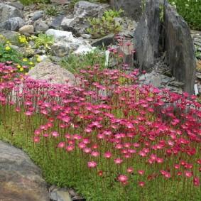 Неприхотливые цветы в саду камней