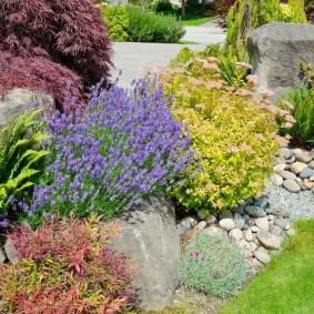 Летнецветущие растения на садовой клумбе