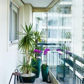 Драцена в интерьере панорамного балкона