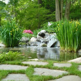 Водные растения в пруду с водопадом
