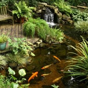 Живые рыбки в садовом водоеме