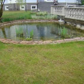 Простой водоем с болотными растениями