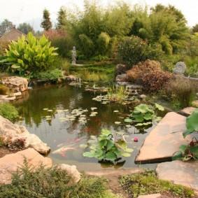 Красивый пруд с гибридными кувшинками