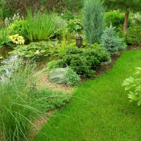Хвойные растения на берегу садового водоема
