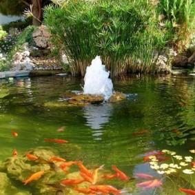 Фонтанчик посередине водоема с рыбами
