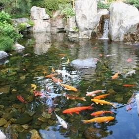 Живые рыбы в искусственном водоеме