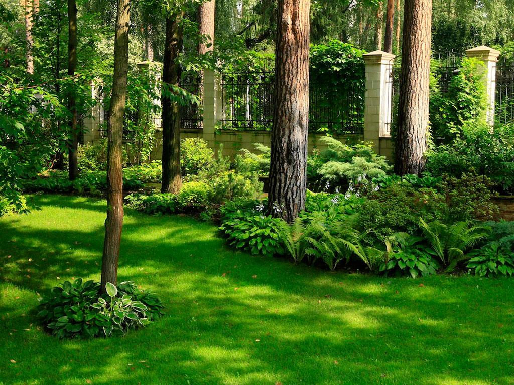 Стриженный газон под высокими деревьями