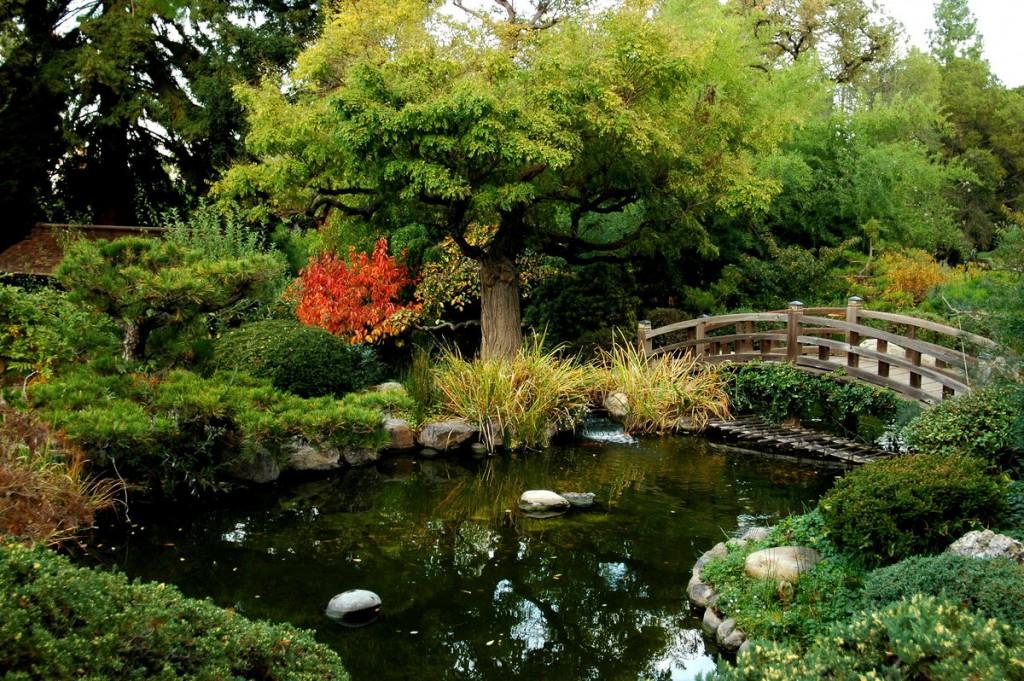 Высокое дерево над прудом в японском стиле