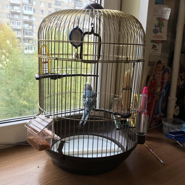 Клетка с попугаем на подоконнике в однушке
