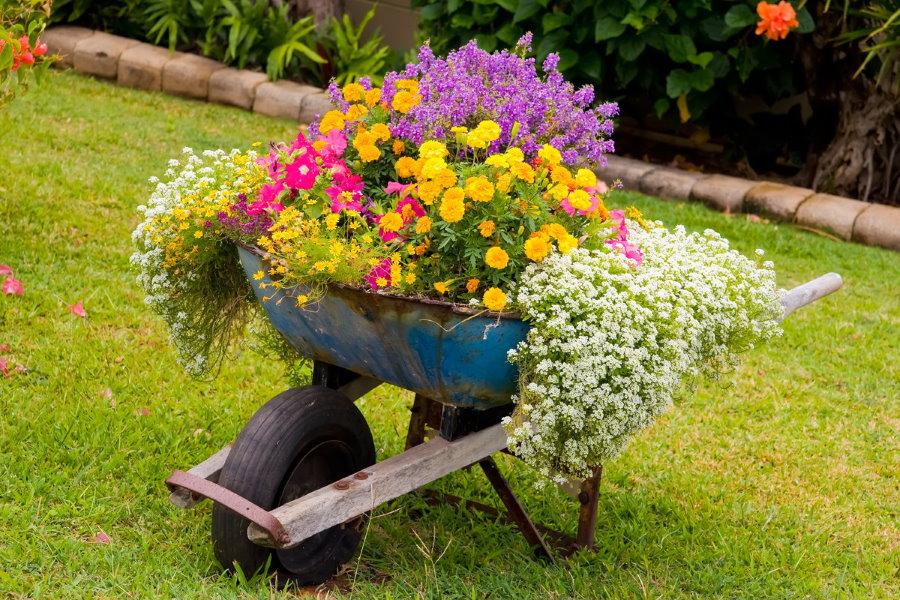 Клумба из старой тачки для однолетних цветов
