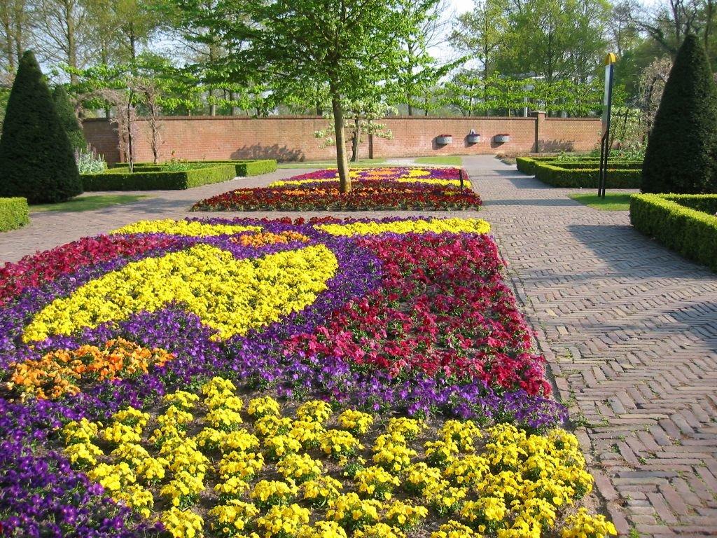 Фото ковровой клумбы с однолетними цветами